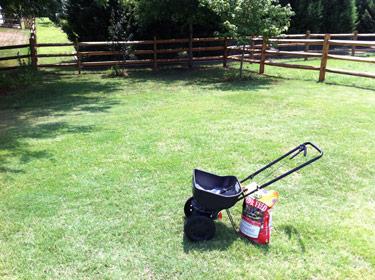 My lawn.
