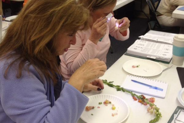 Massachusetts master gardeners volunteers classes gardening workshops